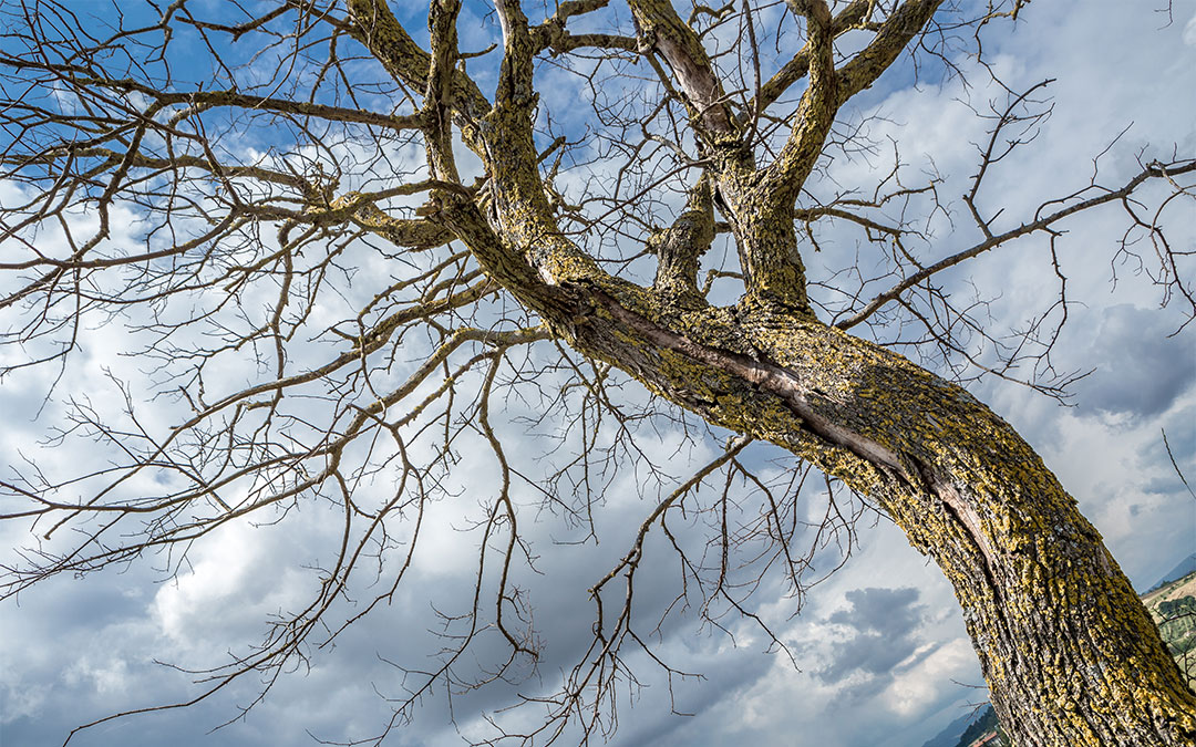 Mott Foundation Grant Will Help Remove Dead and Dangerous Trees Throughout Flint