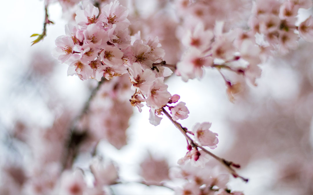 Spring is a Time of Renewal